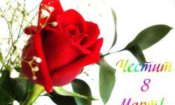 8 март – ден на мама и на всяка жена! Честит празник!